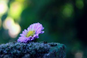 flower 1739892 1280 300x200 - La Calma y cómo lograrla: Trabajando con el inconsciente