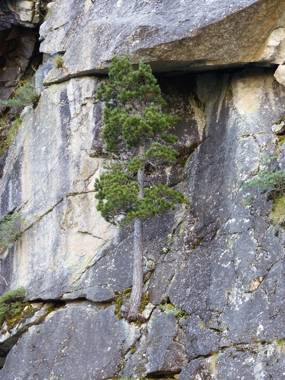 tree 2743254 1280 - La Resiliencia
