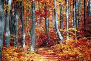 fall 3089995 640 300x200 - fall-3089995_640